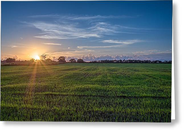 Field Sunset Greeting Card