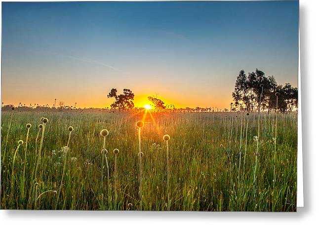 Fields Of Gold Greeting Card by Az Jackson