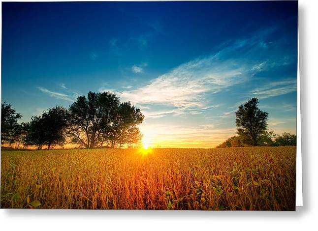 Fields Of Gold Greeting Card by Ryan Heffron