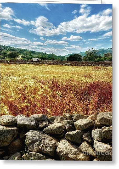 Fields Of Gold Greeting Card by Stephan Grixti