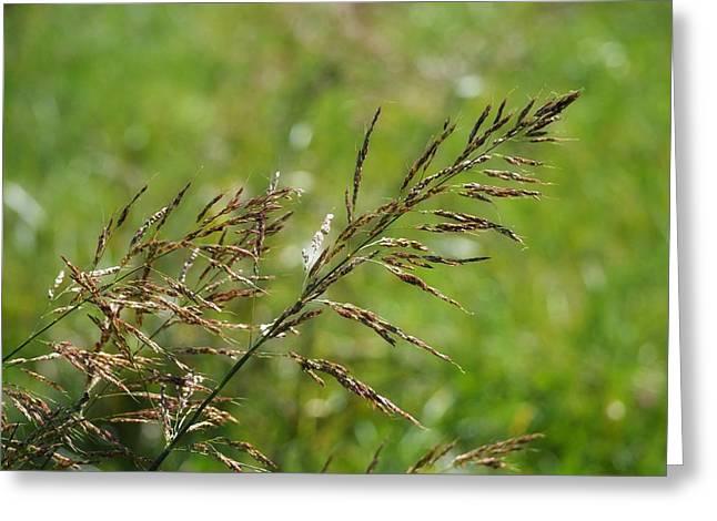 Fields Of Grain Greeting Card
