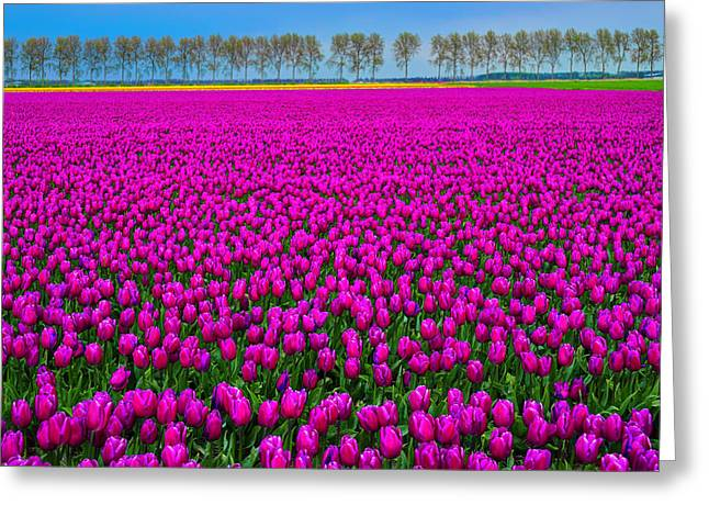 Fields Of Pink Greeting Card