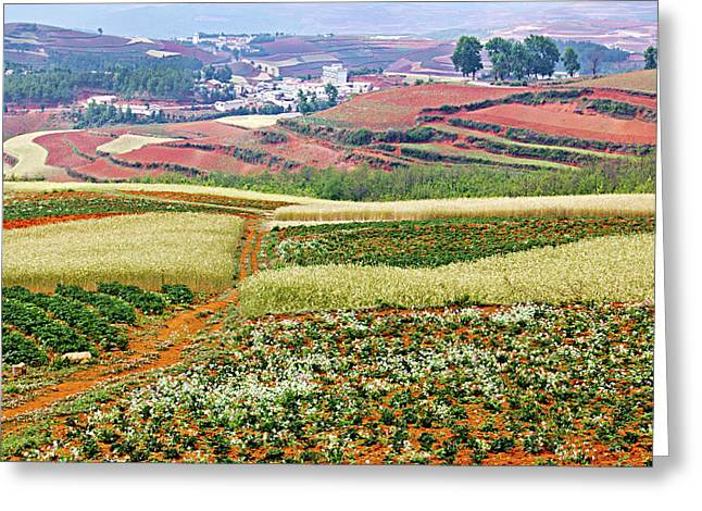 Fields Of The Redlands-1 Greeting Card