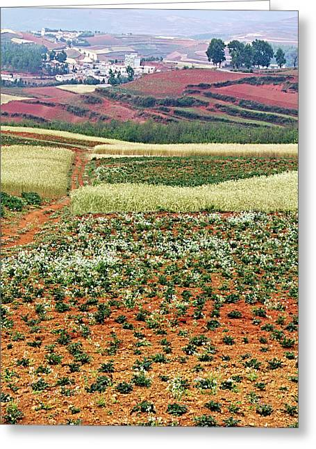 Fields Of The Redlands - 2 Greeting Card