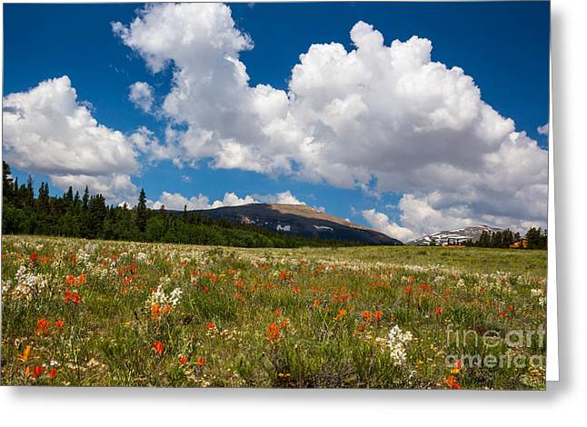 Fields Of Wildflowers Greeting Card