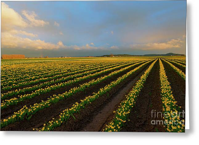 Greeting Card featuring the photograph Fields Of Yellow by Mike Dawson