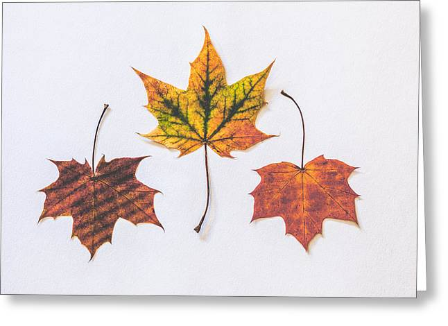 Fiery Beauty Greeting Card by Kate Morton