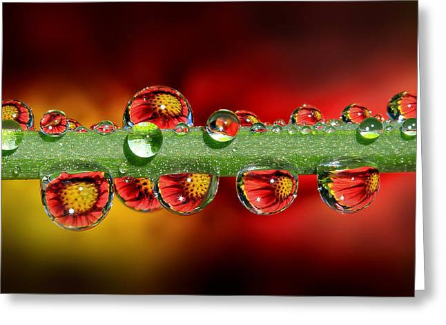 Fiery Drops 16x9 Greeting Card