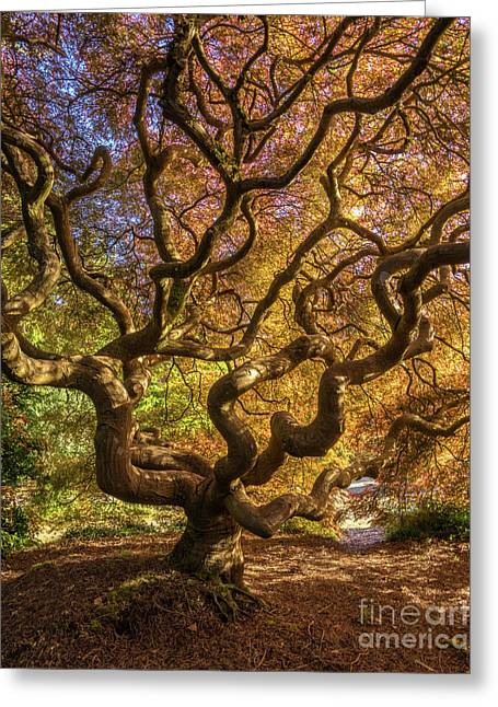 Fiery Fall Colors Tree Of Life Greeting Card by Mike Reid