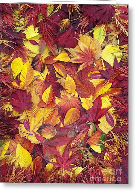 Fiery Autumnal Foliage Greeting Card by Tim Gainey