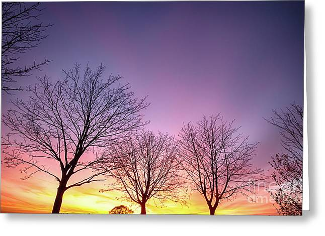 Fiery Winter Sunset With Bare Trees Greeting Card by Simon Bratt Photography LRPS