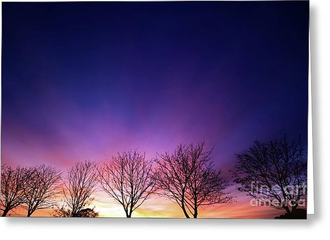 Fiery Winter Sunset With Line Of Bare Trees Greeting Card by Simon Bratt Photography LRPS
