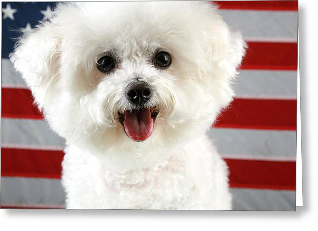 Fifi Loves America Greeting Card by Michael Ledray
