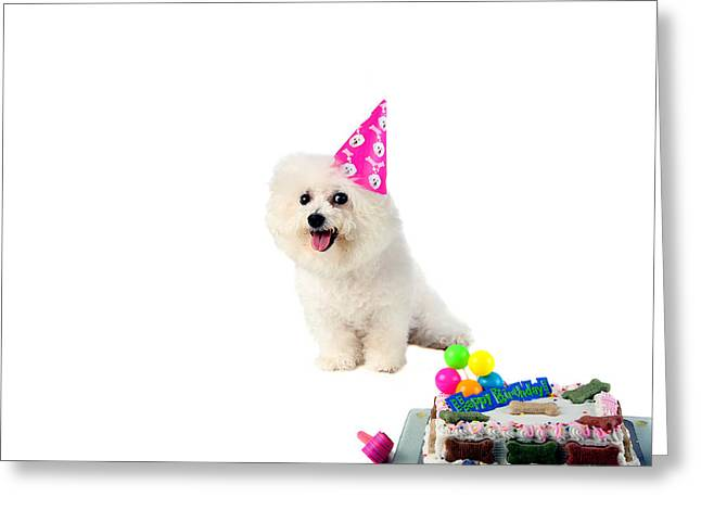 Fifi Loves Birthdays Greeting Card by Michael Ledray