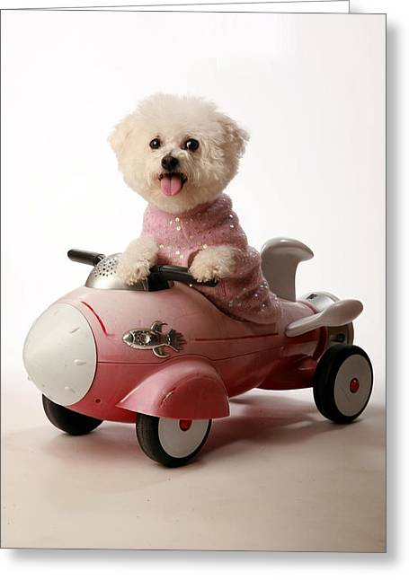 Fifi Ready For Take Off Greeting Card by Michael Ledray