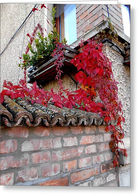 Fifty Shades Of Autumn - 12. Greeting Card
