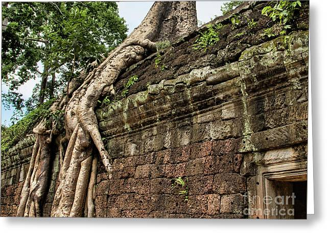Fig Trees Cambodia Taprohm Greeting Card by Chuck Kuhn