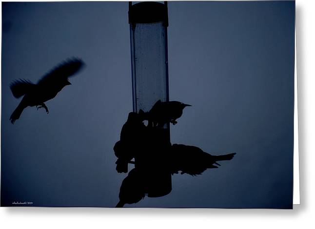 Fight At The Birdfeeder II Greeting Card by Michelle  BarlondSmith