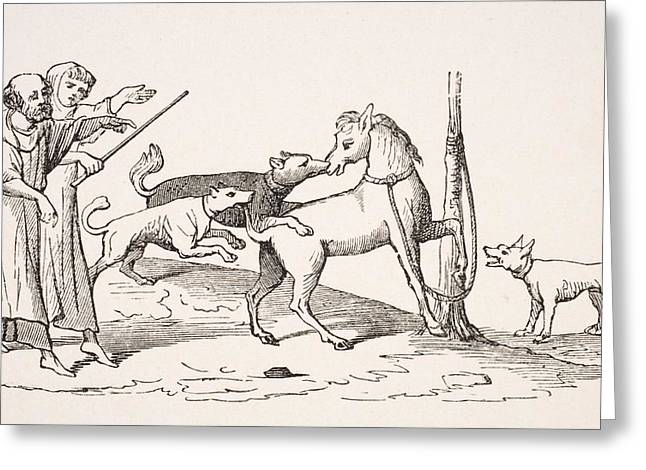 Fight Between Horses And Dogs. 19th Greeting Card by Vintage Design Pics