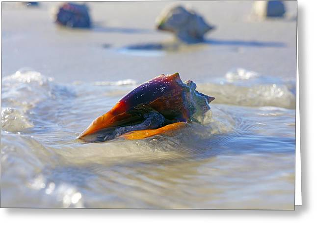 Fighting Conch On Beach Greeting Card by Robb Stan