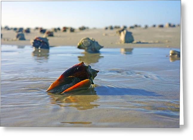 Fighting Conchs On The Sandbar Greeting Card by Robb Stan