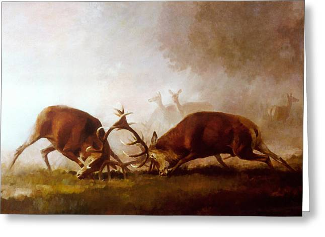 Fighting Stags II. Greeting Card