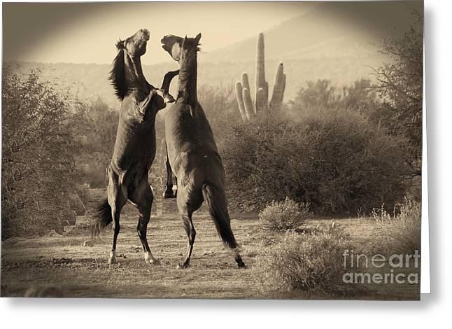 Fighting Stallions Greeting Card