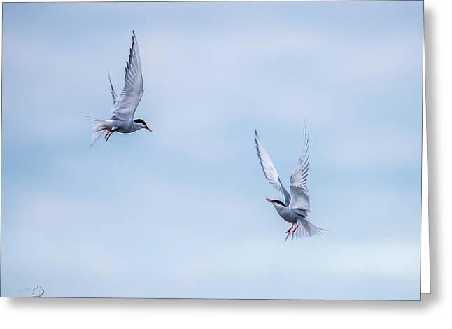 Fighting Terns Greeting Card