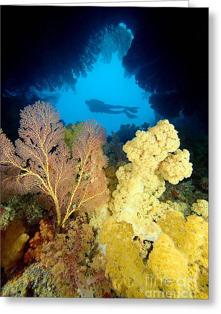Fiji Underwater Greeting Card by Dave Fleetham - Printscapes