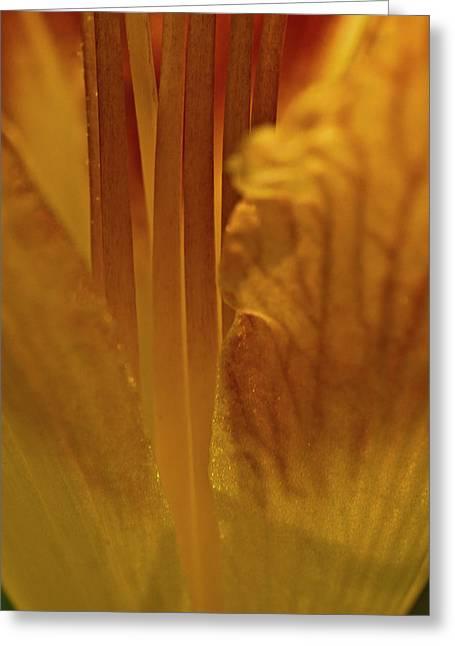 Filaments Of Life Greeting Card