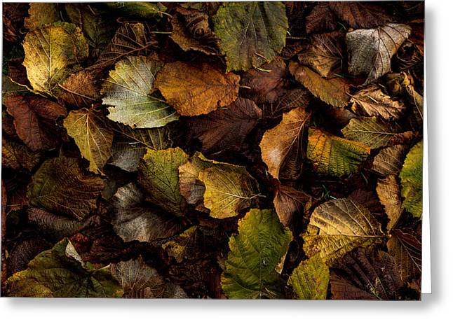 Filbert Leaf Pattern Greeting Card by Jean Noren