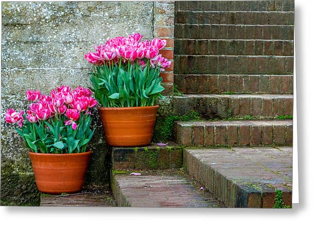 Filoli Tulips Greeting Card by Bill Gallagher