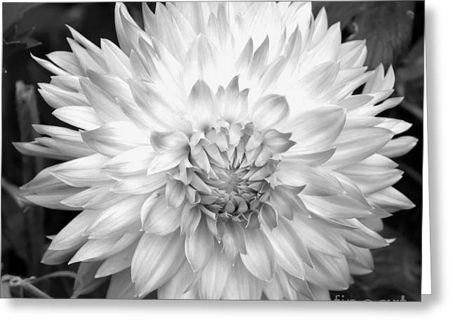 Greeting Card featuring the photograph Filter Series 101 by Jeni Gray