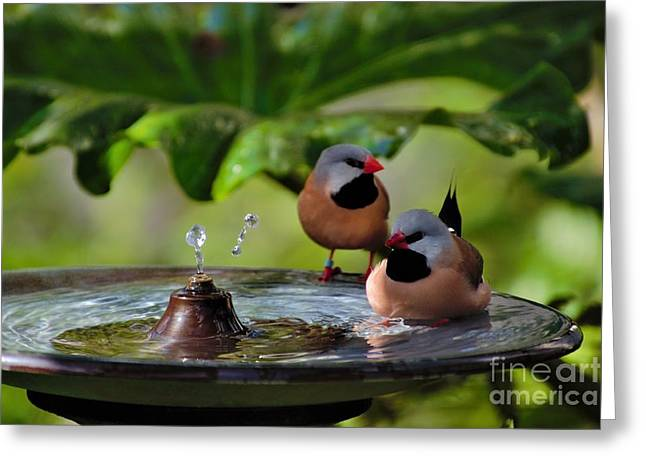 Finch Bath  Greeting Card
