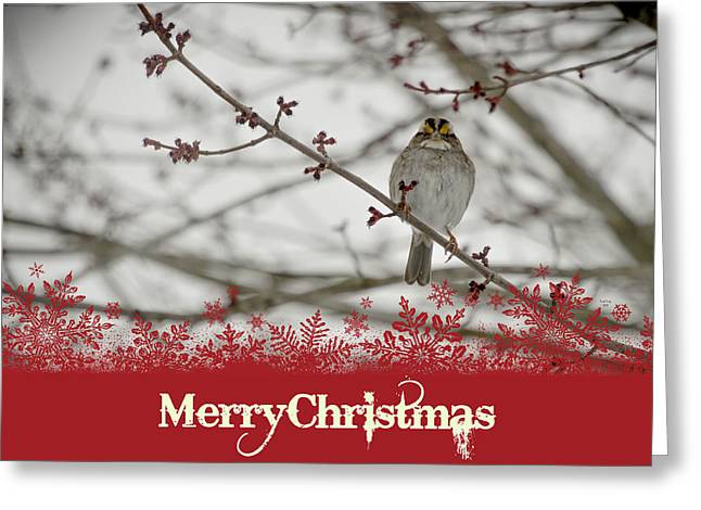 Finch Christmas Greeting Card by Trish Tritz