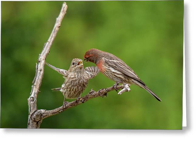 Finch Feeding Time I Greeting Card