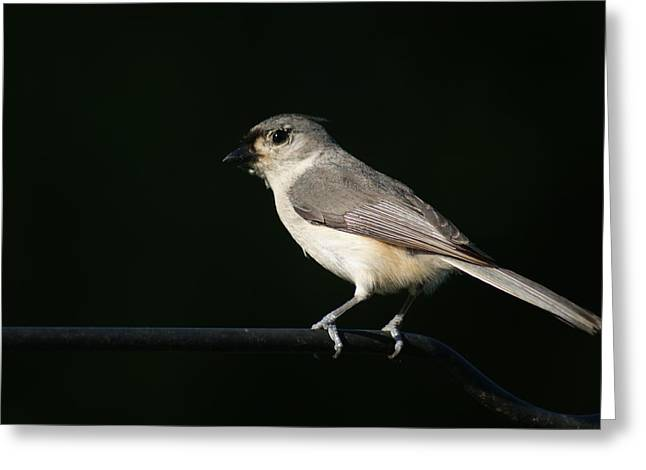 Greeting Card featuring the photograph Finch by Heidi Poulin