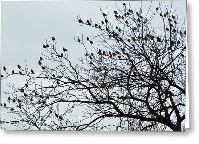 Finches To The Wind Greeting Card