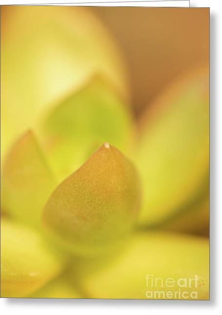 Find Focus In Nature Greeting Card