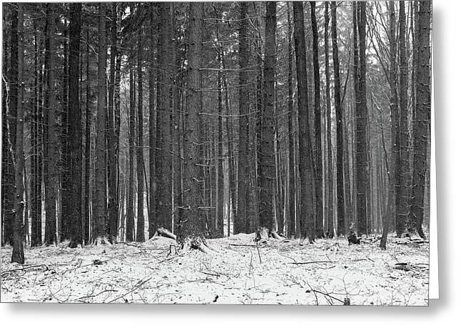 Greeting Card featuring the photograph Ways In A Dark Woods by Dubi Roman