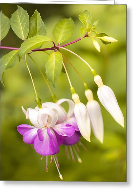 Finding Fuchsia Greeting Card