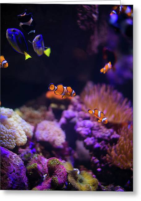 Finding Nemo And Dory 2 Greeting Card