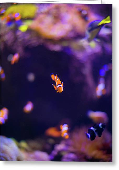 Finding Nemo And Dory 3 Greeting Card