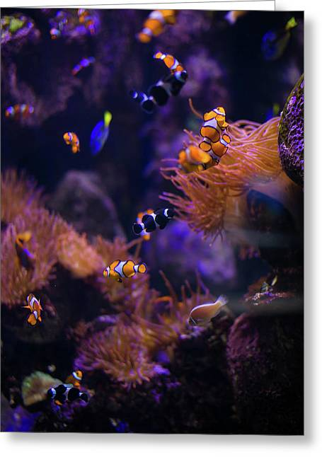 Finding Nemo And Dory Greeting Card