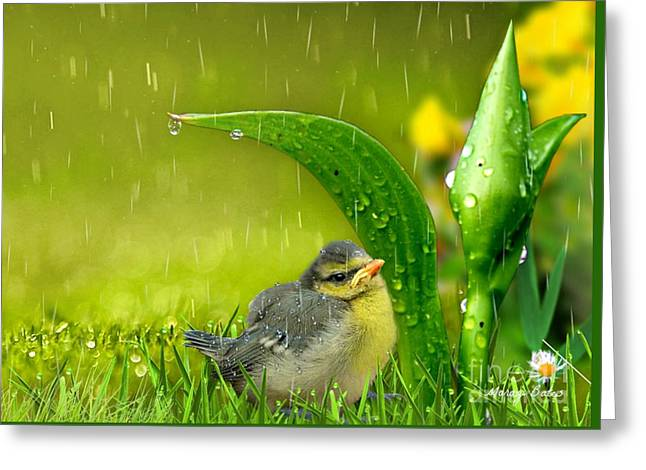 Finding Shelter Greeting Card