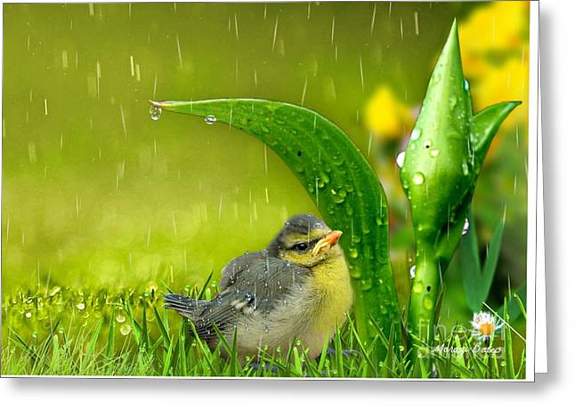 Finding Shelter Greeting Card by Morag Bates