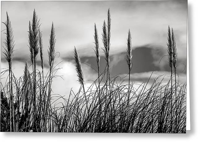 Fine Art Black And White-188 Greeting Card