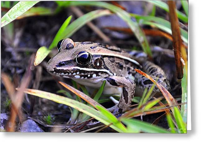 Fine Frog Greeting Card by Al Powell Photography USA