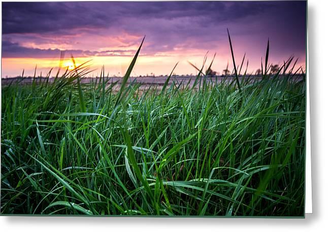 Finn Line Grass Greeting Card by Cale Best