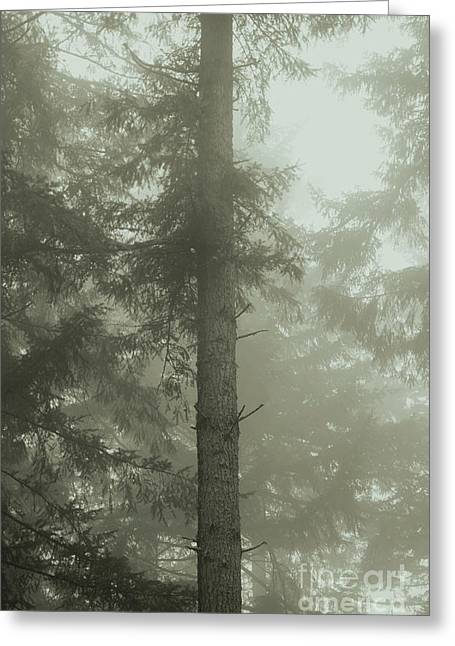 Fir And Fog Greeting Card